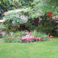 Стая розовых фламинго. :: Галина
