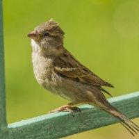 птаха :: Петр Беляков