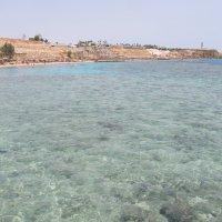 Красное море ,Египет :: tgtyjdrf