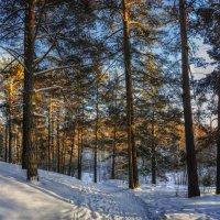 Прогулка по зимнему лесу. :: Vadim Piottukh