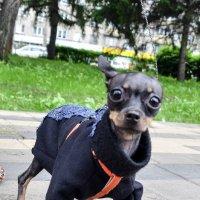 из жизни маленьких собак :: Евгений Фролов