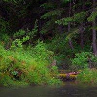 На берегу реки Кочергат :: Nikolay Svetin