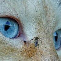 Смелый комарик :: Светлана Рябова-Шатунова