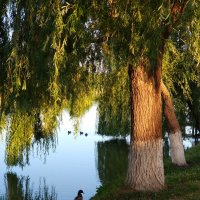 Утро на реке Журавка. :: Валерий Ткаченко