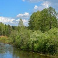 Июнь на реке Каква. :: Наталья