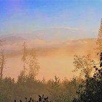 Туман солнечного утра :: Сергей Чиняев
