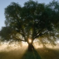 Магическое дерево :: Сергей Калистратов