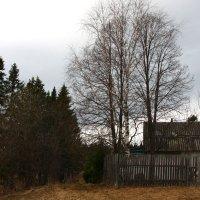 Дом, забор, дерево :: Алексей Екимовских