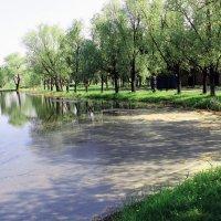 Озеро в парке :: раиса Орловская