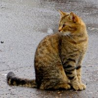 Кошка :: Надежд@ Шавенкова