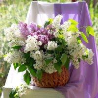 Я люблю этот мир цветной! :: Наталья Казанцева