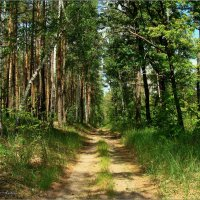 Лесными дорожками... :: °•●Елена●•° ♀
