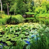 Там, где растут лилии :: Валентина Данилова