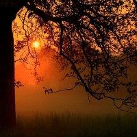 Просто солнышко вдруг заглянуло, в мрачный мир мой тревог и забот.. :: Юрий. Шмаков