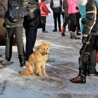 Пропала собака. :: венера чуйкова