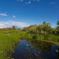 Пейзаж с речкой :: Александр Синдерёв