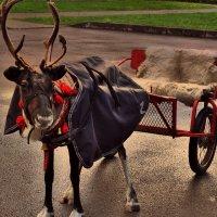 Такси до Лапландии, дорого! :: Антоха Л