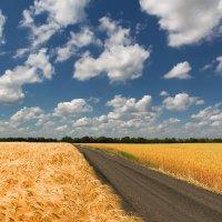 Вдоль  сельских полей. :: Евгений