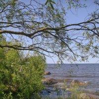 Ива над озером :: lady v.ekaterina
