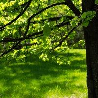 В парке тихо... :: Elena Wise