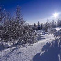 Зимнее  утро :: Александр Паклин