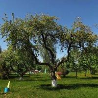 Изящные яблоньки :: Liliya Kharlamova
