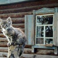 Красивый столбик :: Светлана Рябова-Шатунова