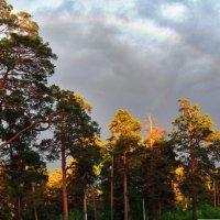 Радуга над лесом :: Зося Каминская