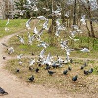 Чайки в городе :: Виталий
