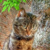 Почти кот учёный :: Леонид Абросимов
