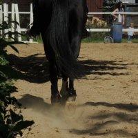 я люблю свою лошадку...) :: sv.kaschuk
