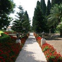 Бахайские сады :: Аркадий Басович