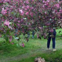 фотосессии цветущих садов :: Галина R...