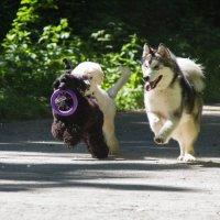 Собаки :: Татьяна I