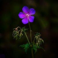 Волшебный цветок :: Алексей Строганов