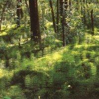 летний день в лесу :: Димончик