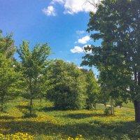 Летневесенний день :: Виталий