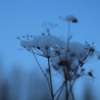 Доброе зимнее утро. :: Айгуль