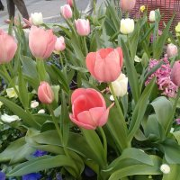 Весна в Мюнхене... :: mirtine