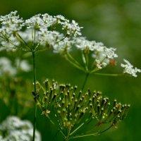 Травы , травы, травы... :: Михаил Столяров