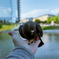 Птичка кушает :: Rigelll80