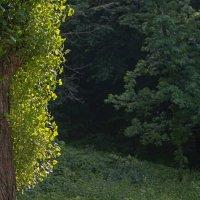 В темно-синем лесу, Где трепещут осины...(с) :: Юрий Васильев