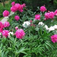 Букет в саду :: sm-lydmila