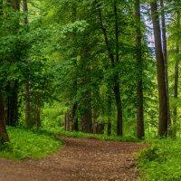 Лесной тропой :: Светлана Григорьева