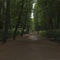 Летний сад... Летний дождь... :: Senior Веселков Петр