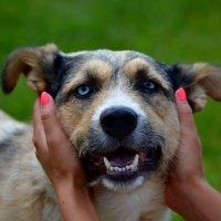 Душа собаки вся в глазах, так преданно смотрящих... :: Ольга Русанова (olg-rusanowa2010)