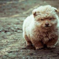 Только от жизни, от жизни собачей, Собака бывает кусачей. :: Людмила Алейникова
