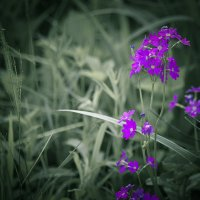 Лесной цветок. :: юрий Амосов