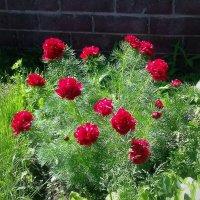 Райские цветы. :: Мила Бовкун