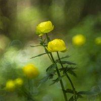 В лесу :: Роман Пацкевич